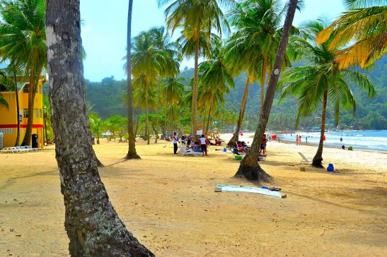Beach scattered with palm trees