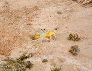 Crabs on beach