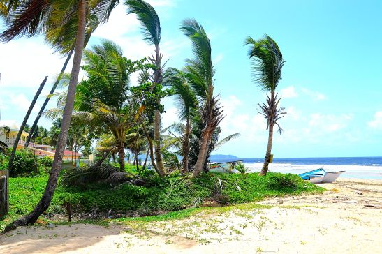Palm trees sway in the wind, taking in the refreshing ocean breeze