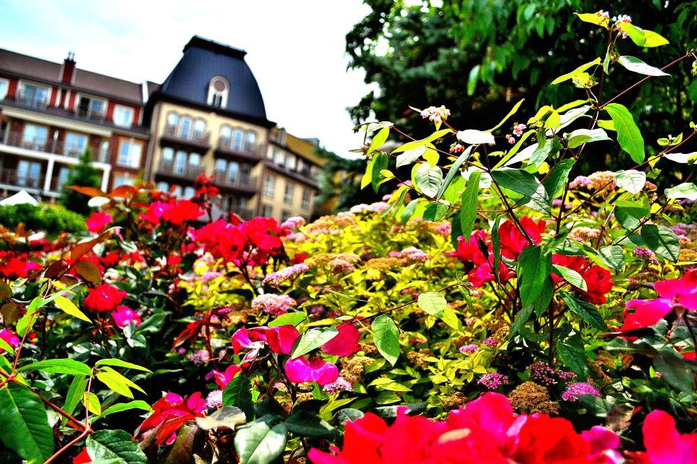 Flower garden blossoming at Blue Mountain