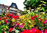 Flower garden blossoming at Blue Mountain