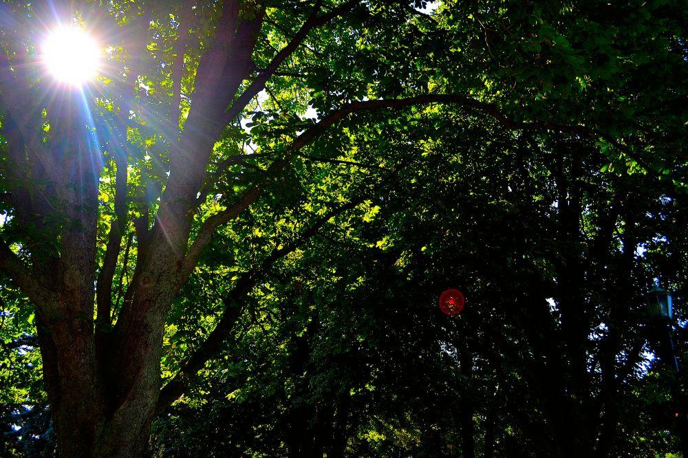 Sunlight peaking through the trees