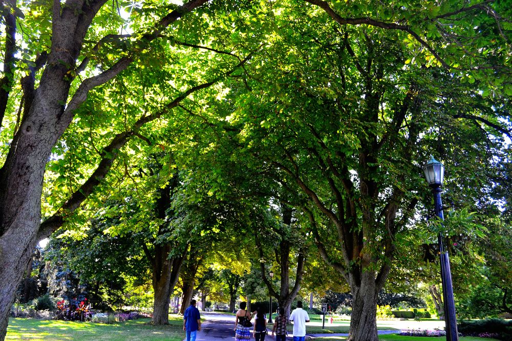 luscious green trees loom over citizens