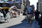 Getting around the streets in a horse carriage is a popular tourist pastime