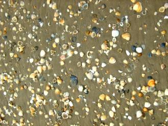 Seashells of Manzanilla
