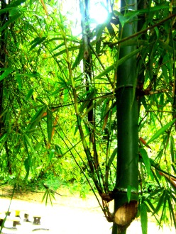 Bamboo steam hangs over head