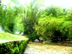Green banks of Cora