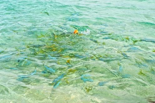Hungry fish swarm the shores © Krystal Seecharan