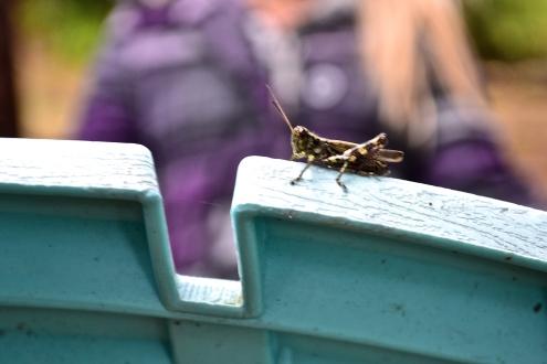 Lone Grasshopper (c) Krystal Seecharan