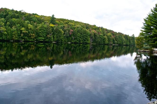 Stretch of forest line the lake (c) Krystal Seecharan