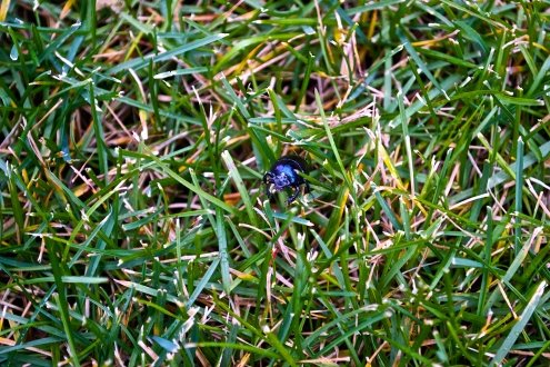 lone critter emerges from the grass