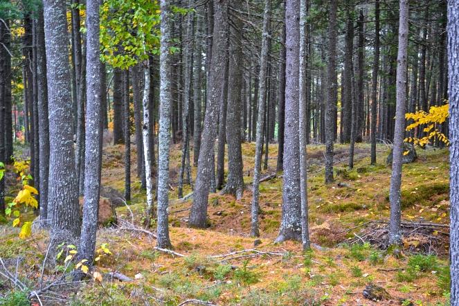 Bare trees create give the forest an eerie feel (c)Krystal Seecharan