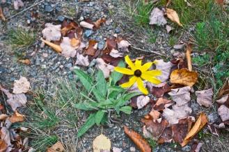 Last remnants of summer (c)Krystal Seecharan