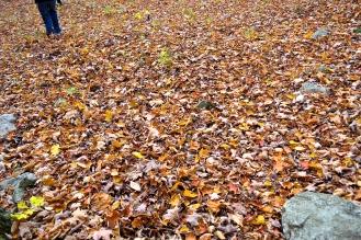 Fall leaves as far as the eye can see. (c)Krystal Seecharan