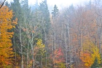 Morning fog settling on the forest (c)Krystal Seecharan