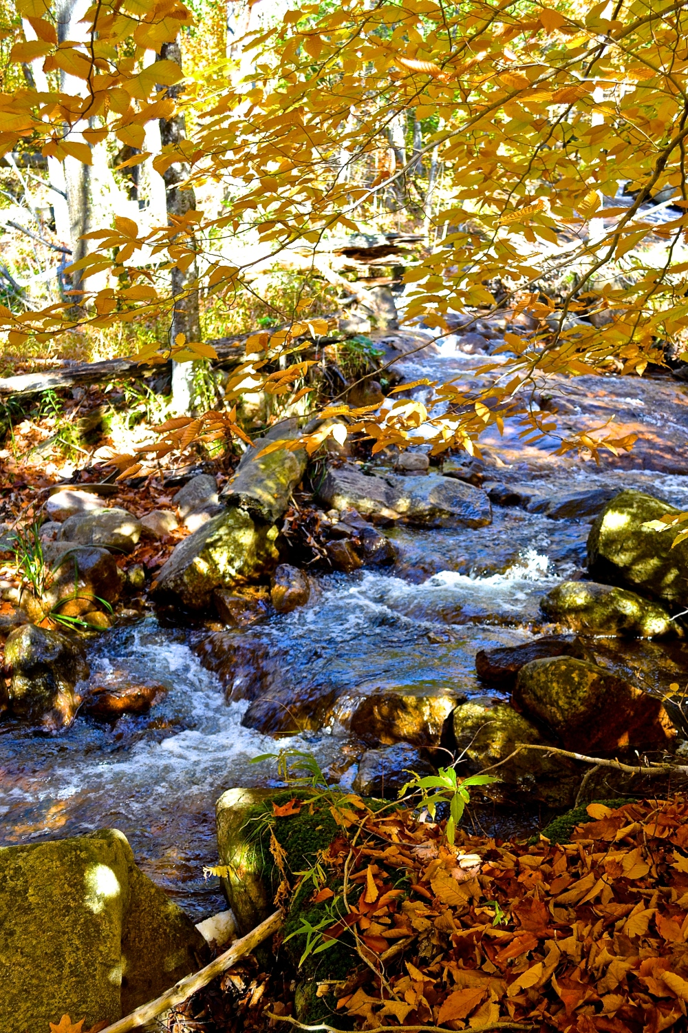 Small stream accented with gold (c)Krystal Seecharan