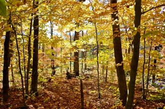 Hiking through forest foothills of Mont Tremblant