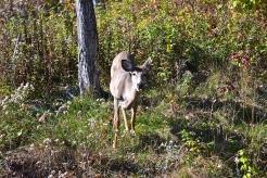 Close encounter with a wild deer (c)Krystal Seecharan